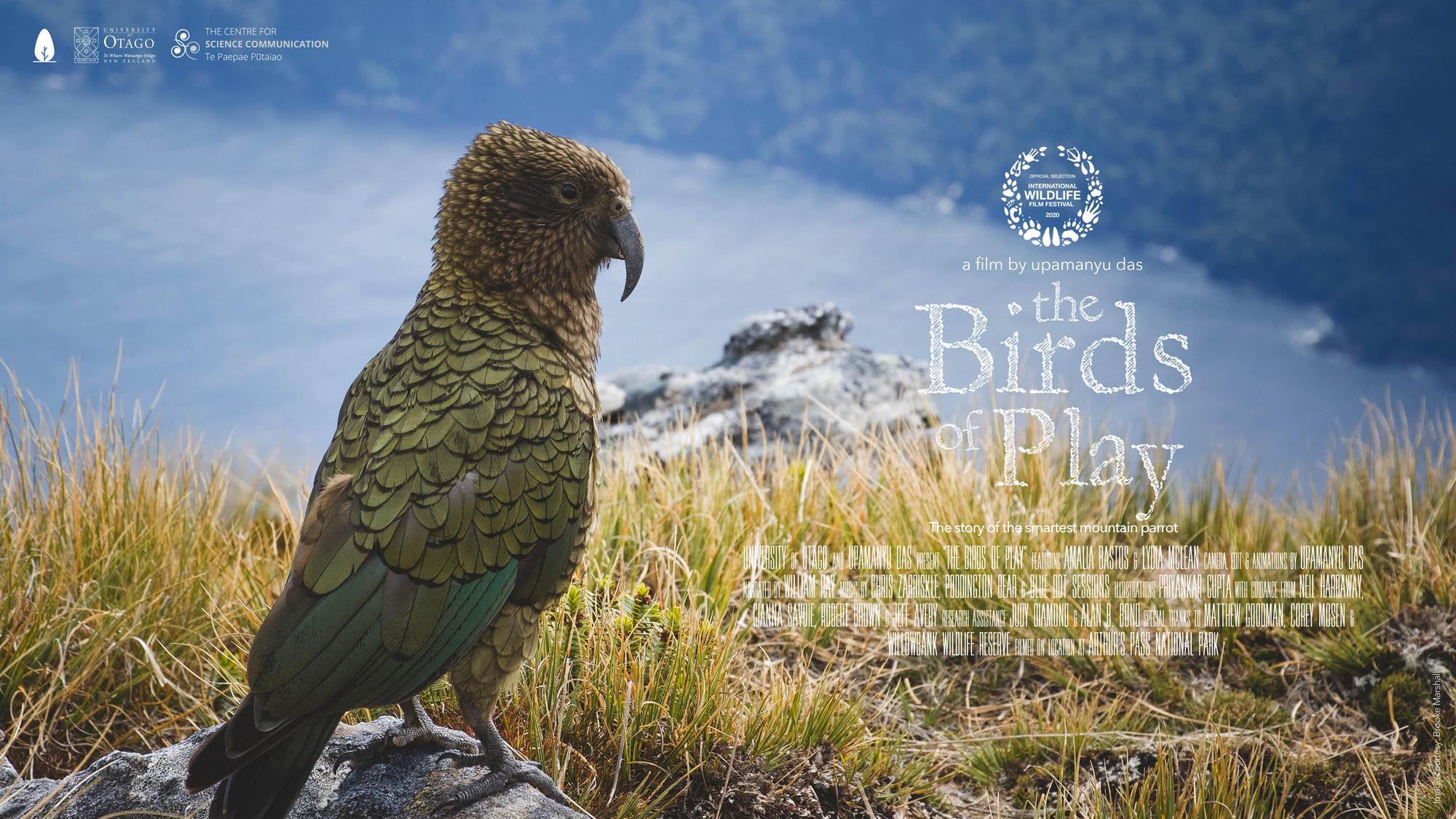 birdsofplay